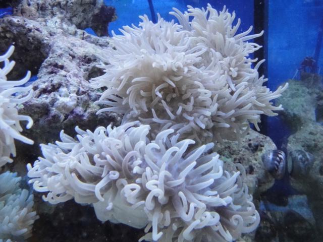 海水魚・サンゴ・水草・淡水魚_f0189122_13315741.jpg