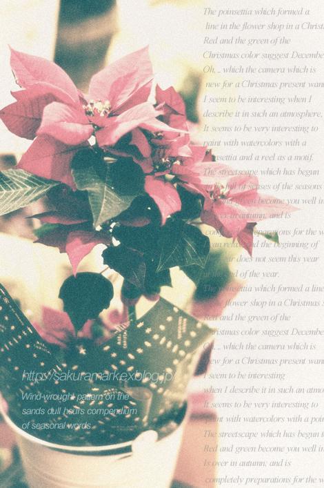Christmas color._f0235723_19341064.jpg