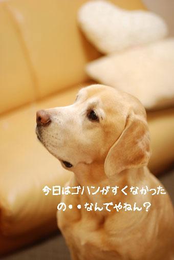 b0138824_16294510.jpg