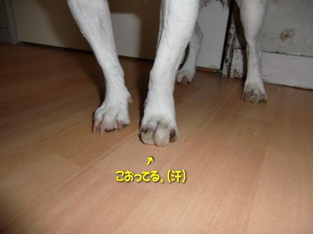 b0105157_1925215.jpg