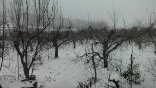 雪_d0139362_16324125.jpg