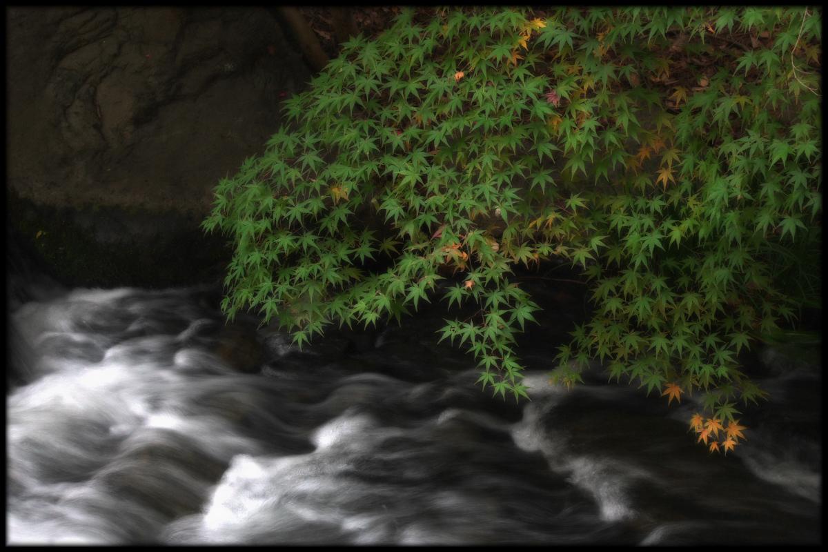 紅葉 2010 <万博記念公園> _f0021869_05021.jpg