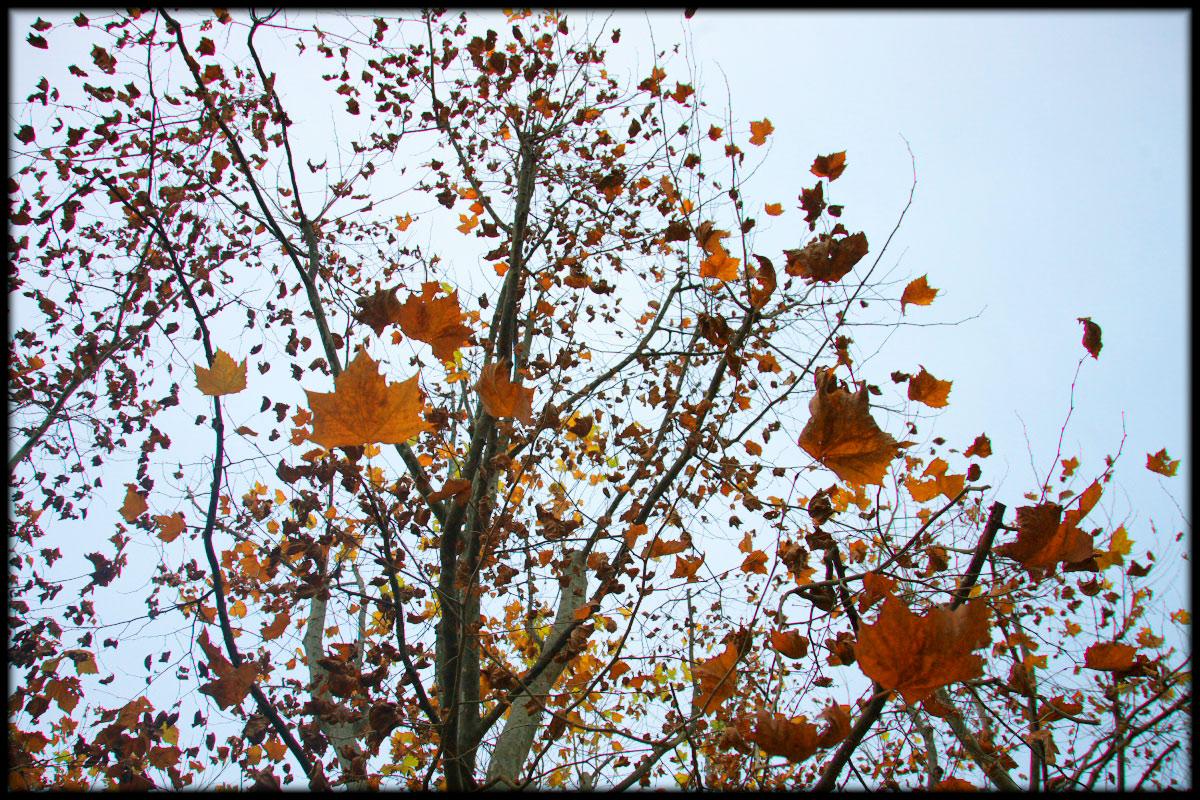 紅葉 2010 <万博記念公園> _f0021869_17274067.jpg