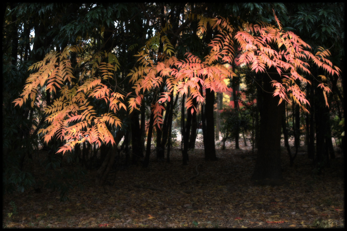 紅葉 2010 <万博記念公園> _f0021869_1728748.jpg
