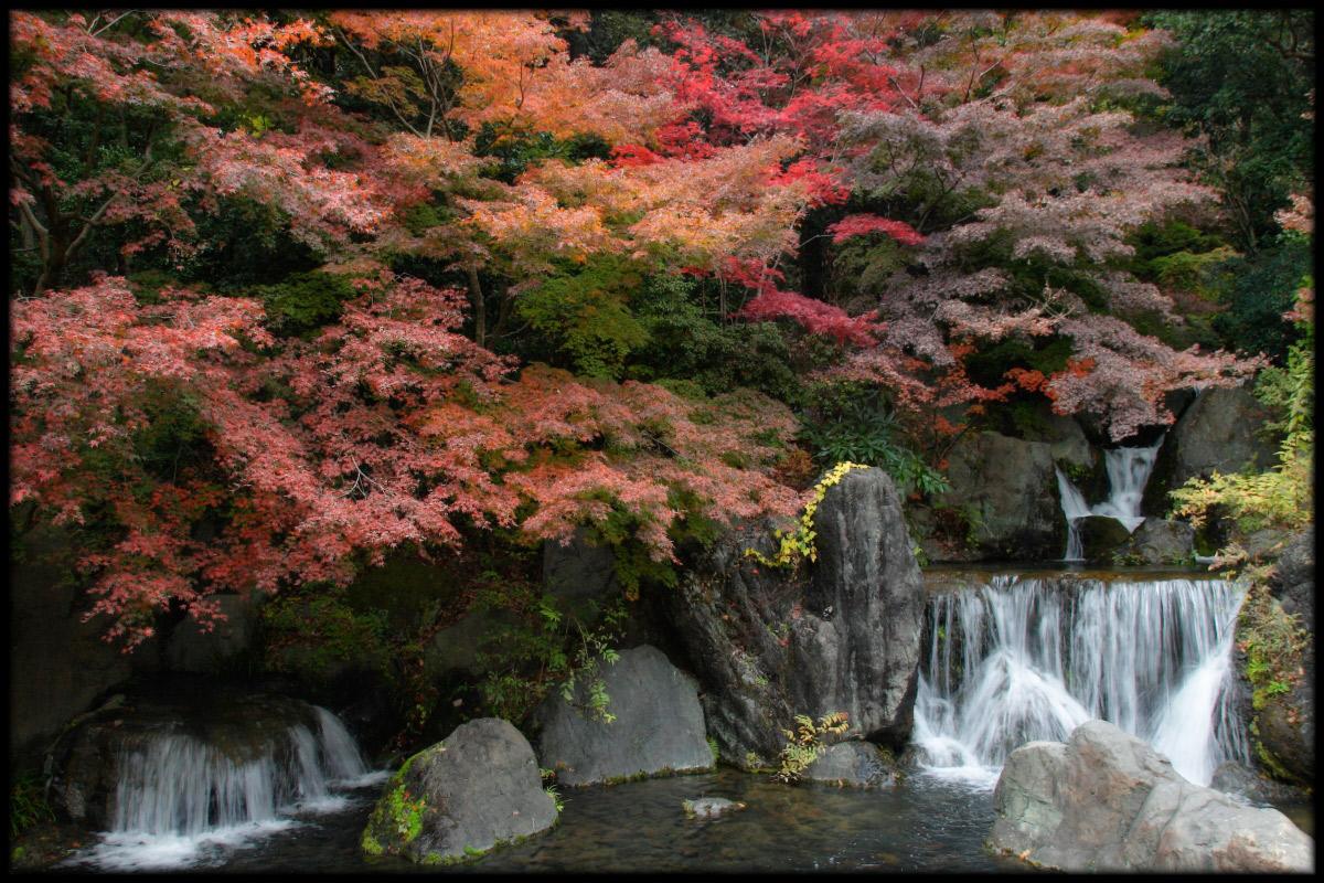 紅葉 2010 <万博記念公園> _f0021869_1729034.jpg