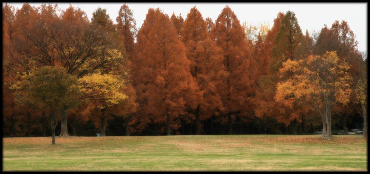 紅葉 2010 <万博記念公園> _f0021869_17295626.jpg