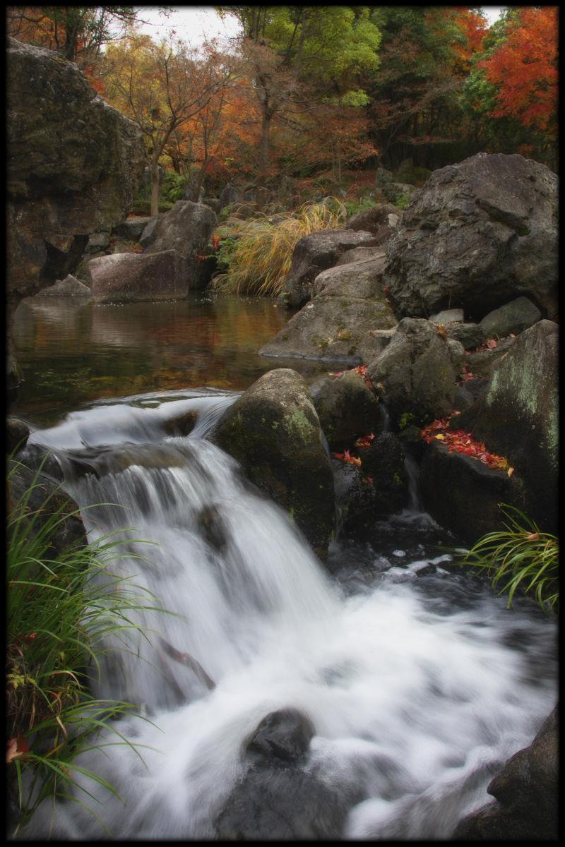 紅葉 2010 <万博記念公園> _f0021869_17303321.jpg