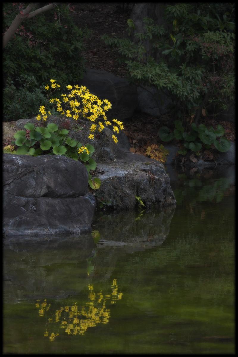 紅葉 2010 <万博記念公園> _f0021869_17305078.jpg