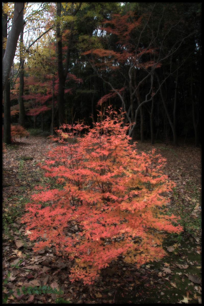 紅葉 2010 <万博記念公園> _f0021869_1730974.jpg