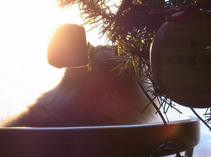 【今日の一枚】12月のある朝_c0025115_19402237.jpg