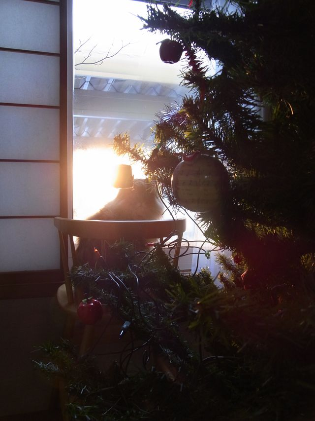 【今日の一枚】12月のある朝_c0025115_19402369.jpg