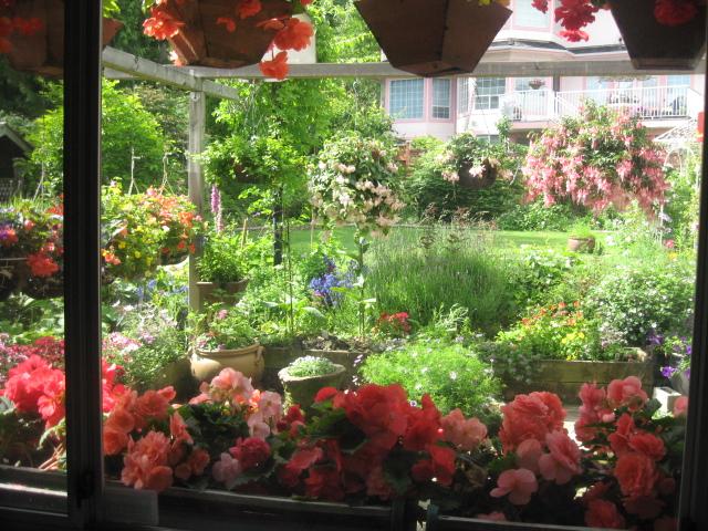 外は冬景色なので、春夏の花たちをあっぷします。 _a0173527_17122061.jpg