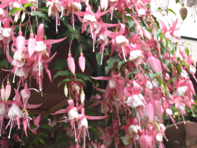 外は冬景色なので、春夏の花たちをあっぷします。 _a0173527_1713079.jpg