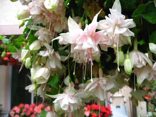 外は冬景色なので、春夏の花たちをあっぷします。 _a0173527_17134987.jpg