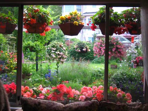 外は冬景色なので、春夏の花たちをあっぷします。 _a0173527_17164182.jpg