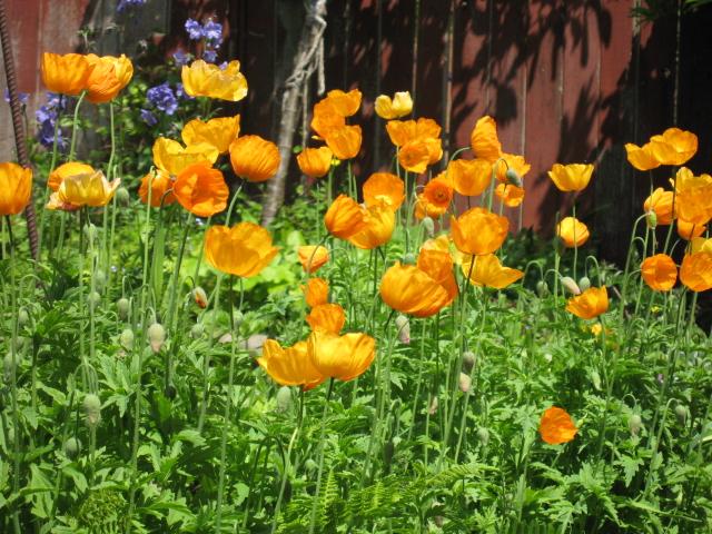 外は冬景色なので、春夏の花たちをあっぷします。 _a0173527_17201023.jpg