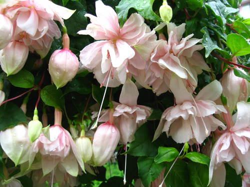 外は冬景色なので、春夏の花たちをあっぷします。 _a0173527_17242737.jpg