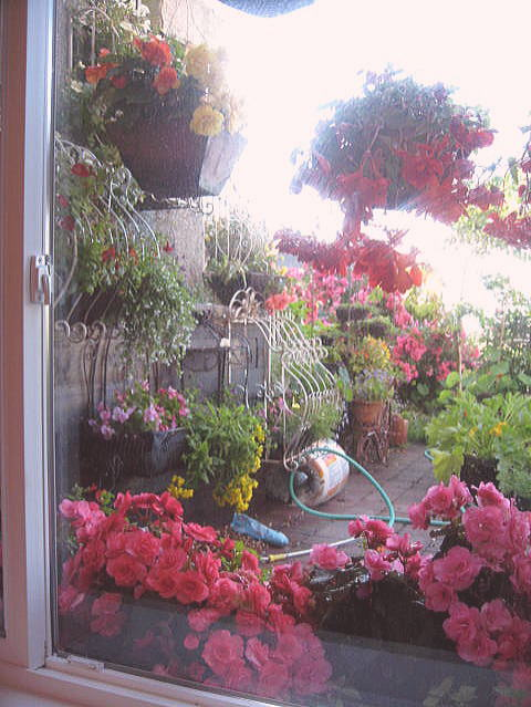 外は冬景色なので、春夏の花たちをあっぷします。 _a0173527_17371453.jpg
