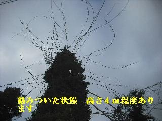 f0031037_20354436.jpg