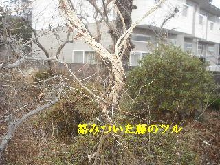 f0031037_2035963.jpg