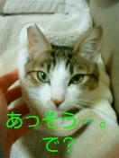 c0052756_17172598.jpg