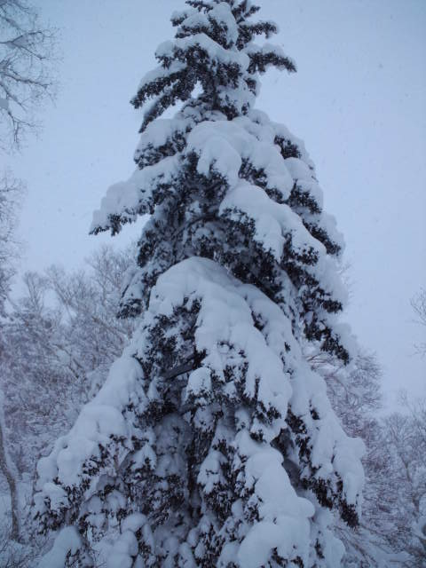 初滑り ☆ 札幌国際スキー場_c0151965_22452763.jpg