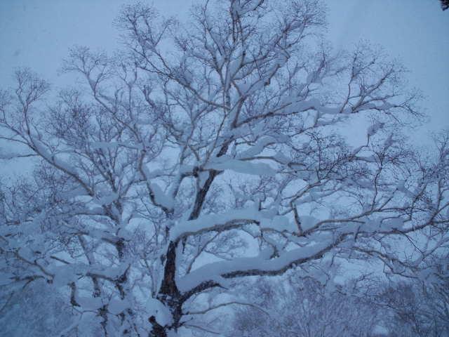 初滑り ☆ 札幌国際スキー場_c0151965_2245394.jpg