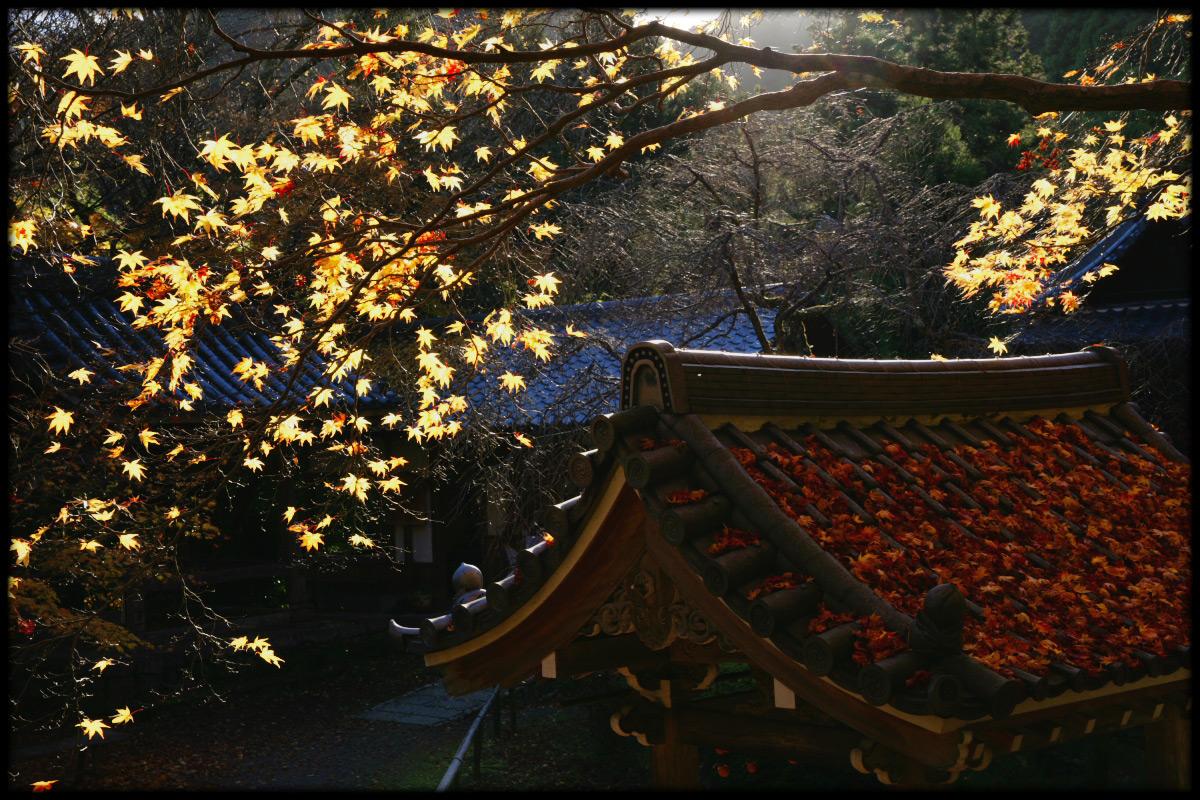紅葉 2010 <金蔵寺> 8_f0021869_19562337.jpg