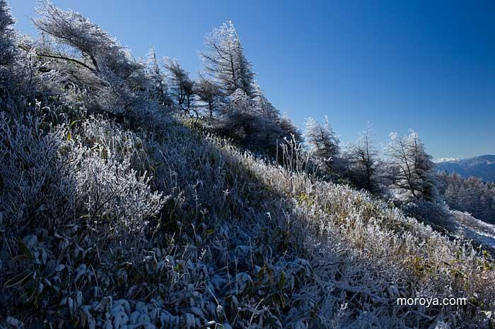 霧氷を求めて〜美ヶ原武石峰へ_c0085877_8374896.jpg