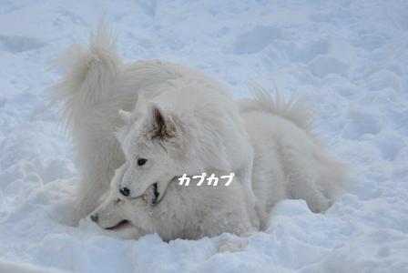 f0212597_632358.jpg