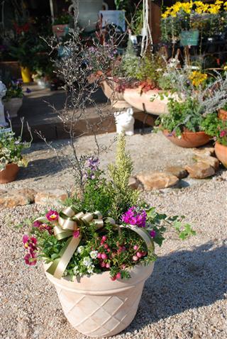 庭~ギフト。。_c0173939_23545316.jpg