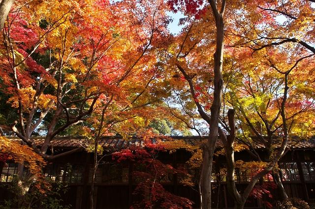本土寺 2010秋 6_f0018464_781536.jpg