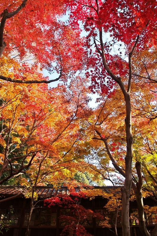 本土寺 2010秋 6_f0018464_78277.jpg
