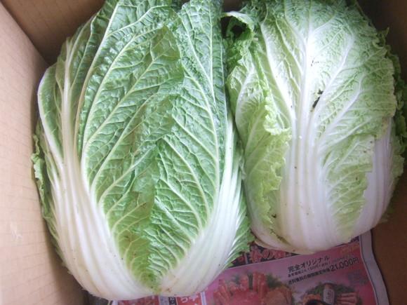 冬野菜は豊作!_b0137932_161735.jpg