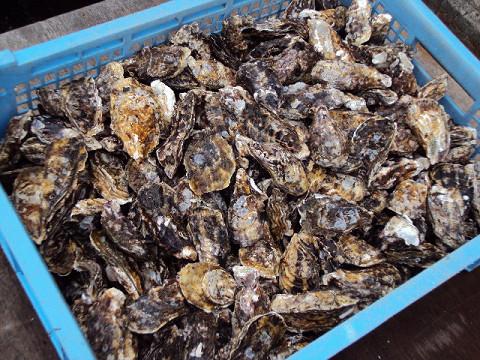 牡蠣を食べに・・・牟礼へGO_f0207932_11472636.jpg