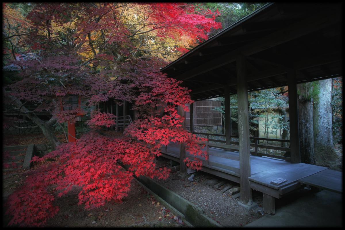 紅葉 2010 <大原野神社> 3_f0021869_11593291.jpg