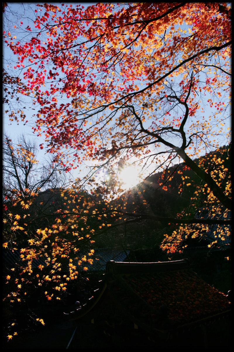 紅葉 2010 <金蔵寺> 9_f0021869_1274471.jpg