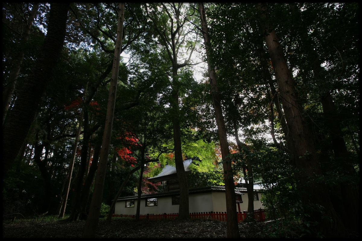 紅葉 2010 <鷺森神社> _f0021869_1447629.jpg