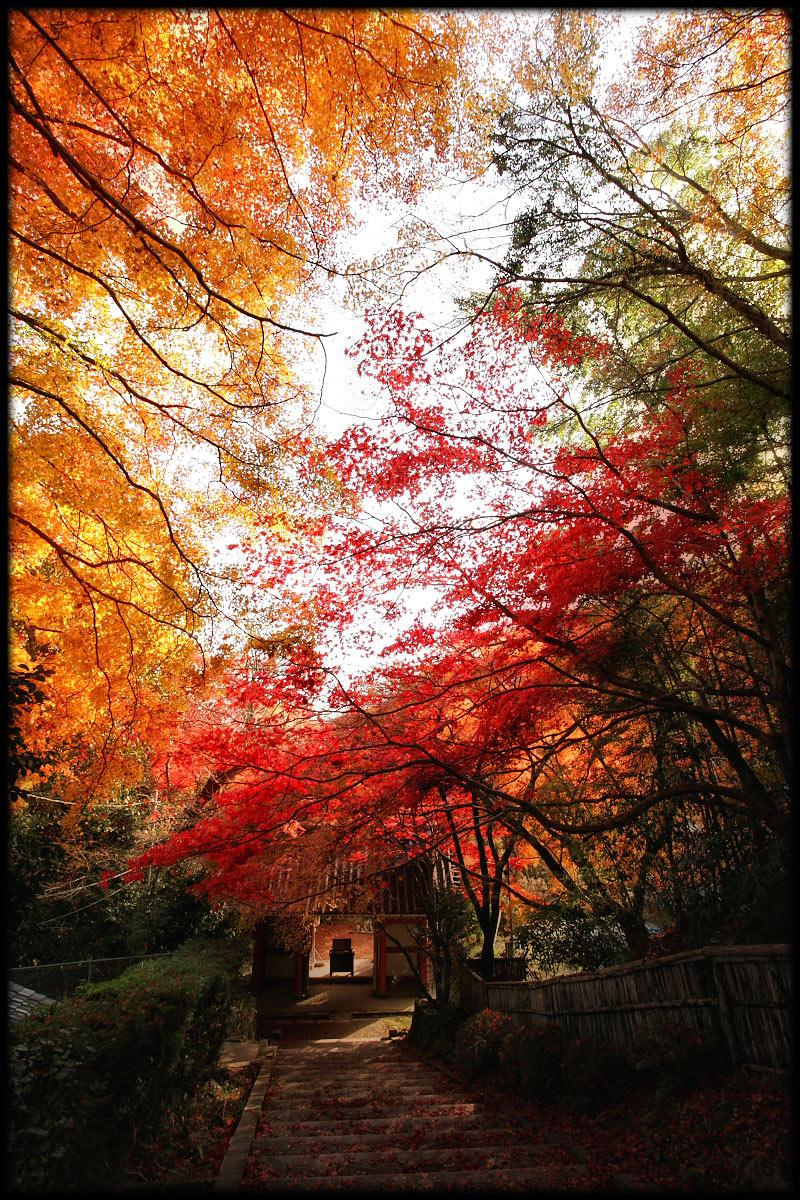 紅葉 2010 <金蔵寺> 10_f0021869_23373397.jpg