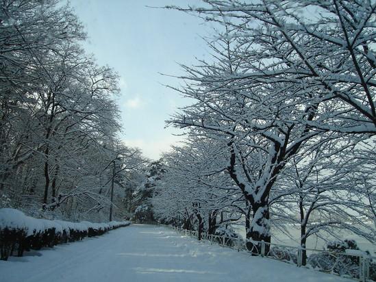 とうとう冬がやって来た!_a0025572_1523011.jpg