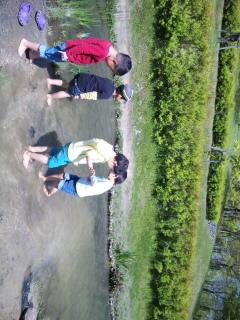 水辺に群れる