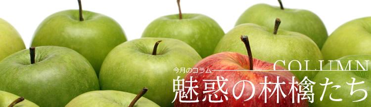 魅惑の林檎たち_d0198781_1625973.jpg