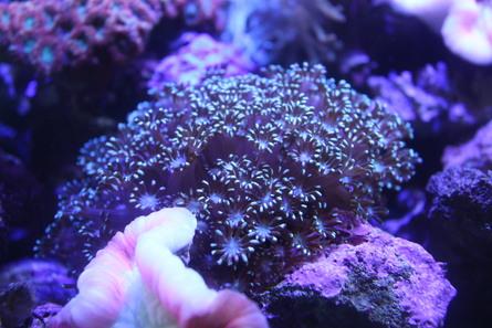 入荷済サンゴ画像等_e0173381_0231385.jpg