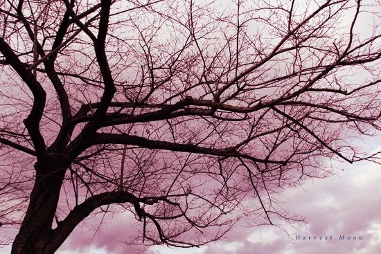 冬桜_b0208495_7562653.jpg