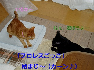 b0200310_20235822.jpg