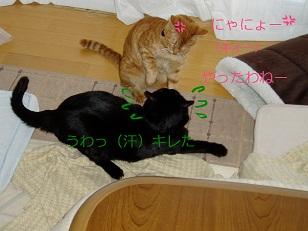 b0200310_20302490.jpg