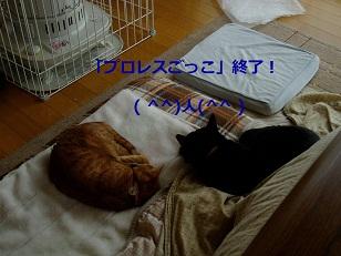 b0200310_2039892.jpg