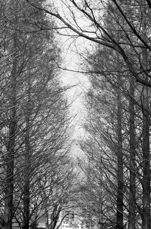 冬が来た_d0065116_1921789.jpg