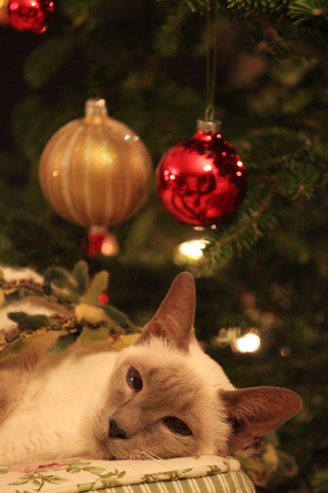 クリスマスツリーとココア_f0095325_1141691.jpg