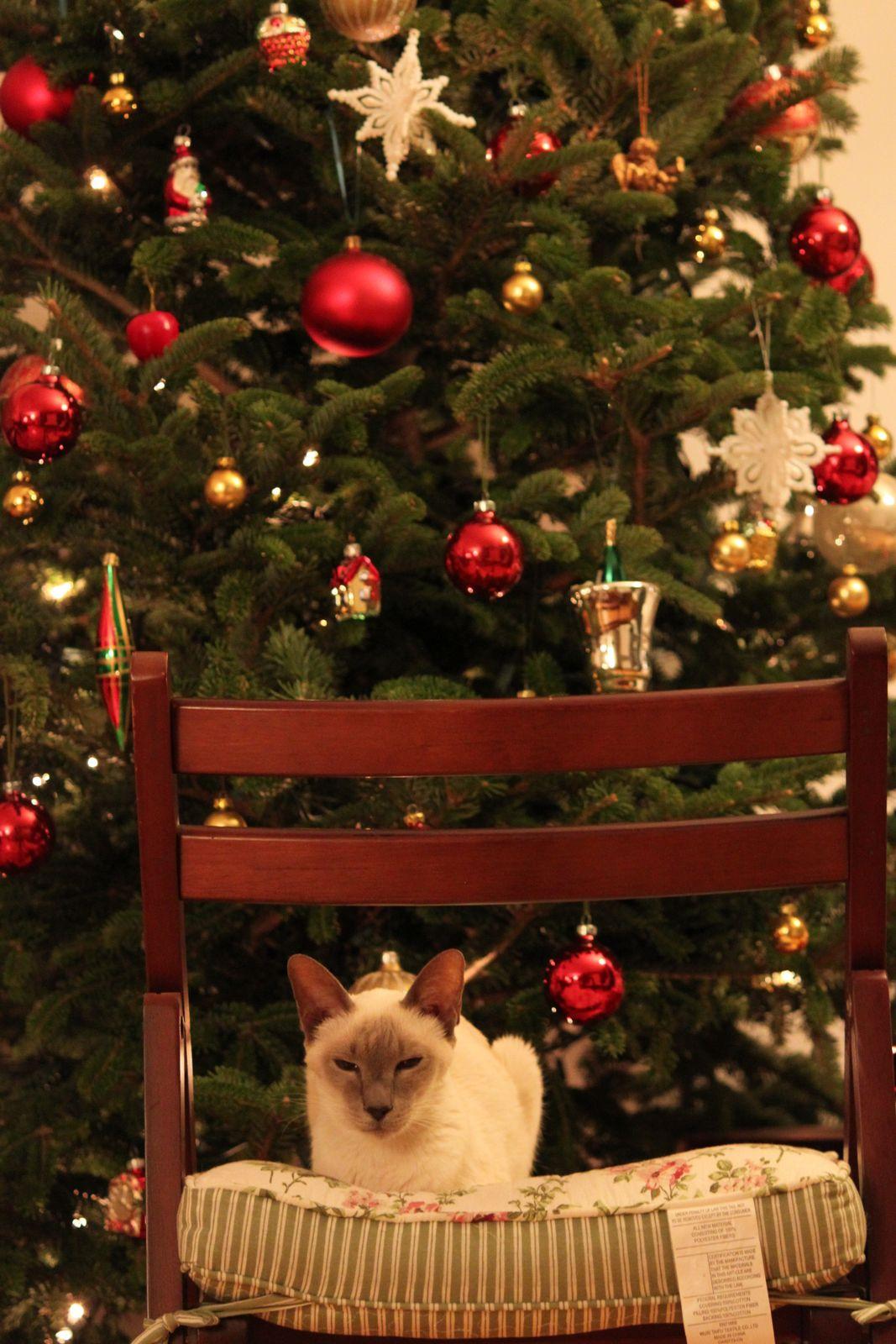 クリスマスツリーとココア_f0095325_1143140.jpg